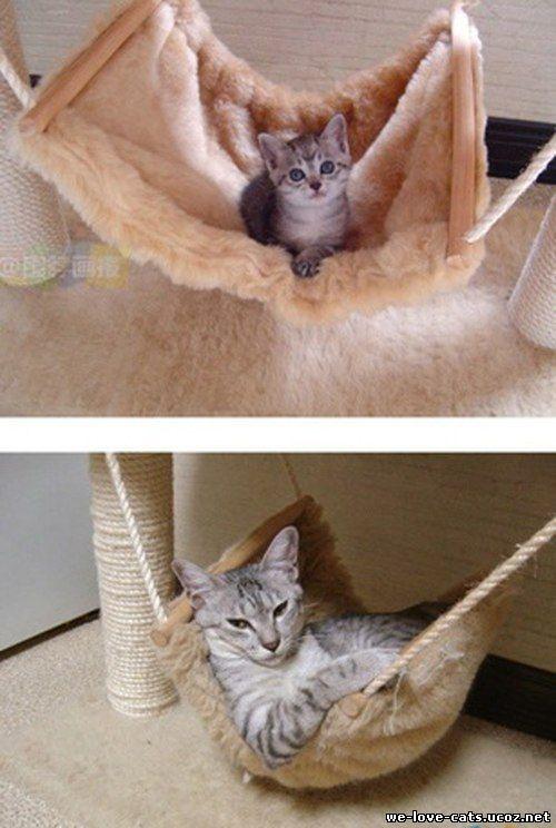 Как сделать маленького кота